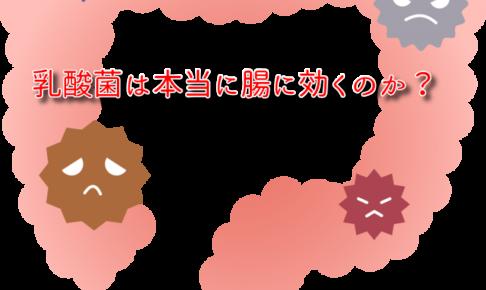 腸 乳酸菌